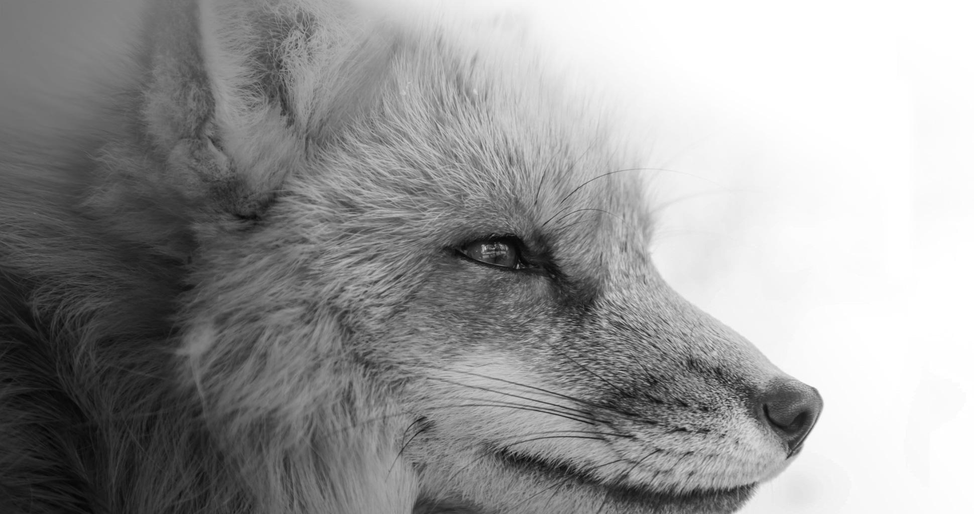 191115_CP_HOME_fox